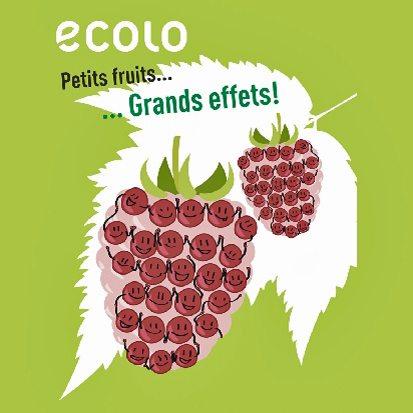 27/11 : Distribution gratuite de petits arbres fruitiers